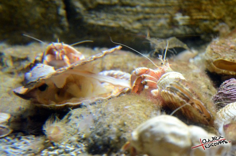 Aquarium La Rochelle (2)