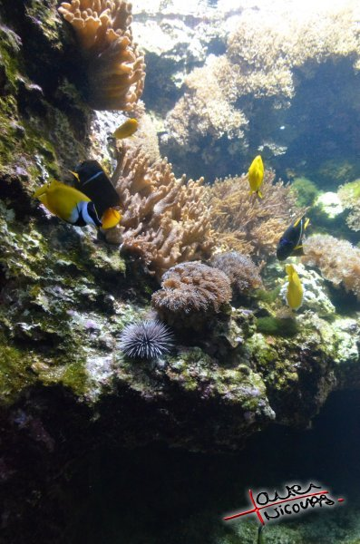 Aquarium La Rochelle (26)