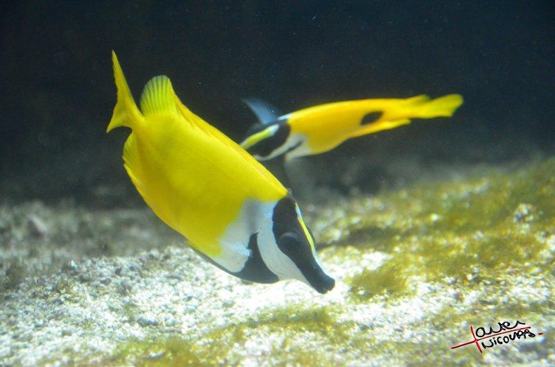 Aquarium La Rochelle (28)