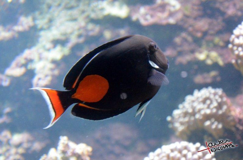 Aquarium La Rochelle (30)