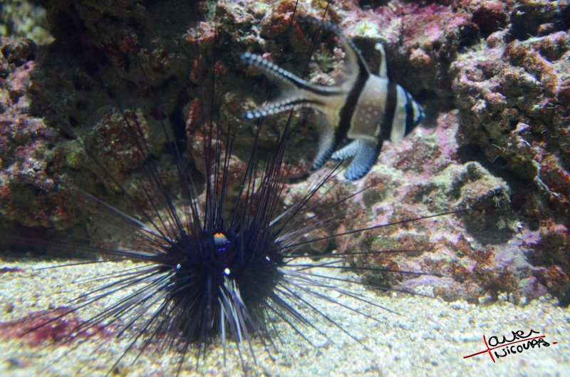 Aquarium La Rochelle (33)