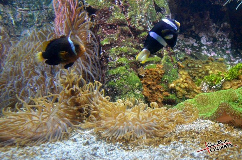Aquarium La Rochelle (34)