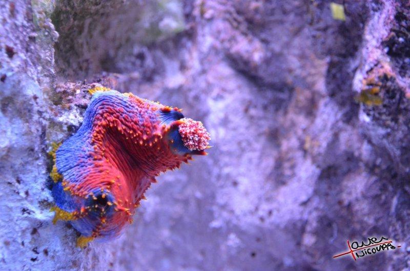 Aquarium La Rochelle (40)