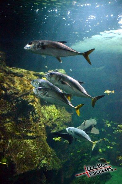 Aquarium La Rochelle (47)
