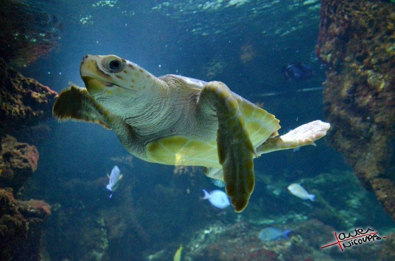 Tortue - Aquarium La Rochelle (20)