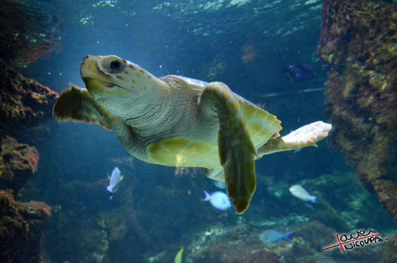 D couvrez la magie de l 39 oc an l 39 aquarium de la rochelle for Aquarium tortue