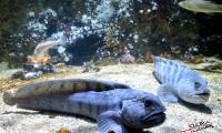 Aquarium La Rochelle (3)