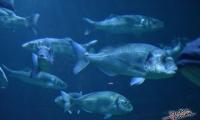 Aquarium La Rochelle (6)