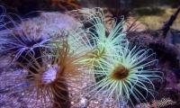 Aquarium La Rochelle (12)