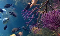 Aquarium La Rochelle (8)