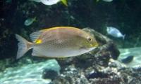 Aquarium La Rochelle (23)
