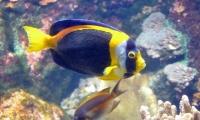 Aquarium La Rochelle (25)