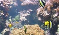 Aquarium La Rochelle (29)