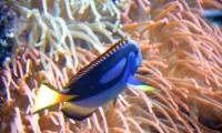 Aquarium La Rochelle (35)