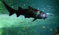 Aquarium La Rochelle (38)