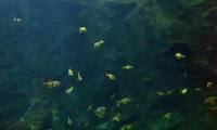Aquarium La Rochelle (43)