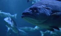 Aquarium La Rochelle (7)