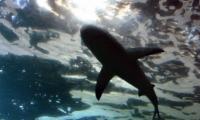 Requin - Aquarium La Rochelle (45)