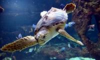 Tortue - Aquarium La Rochelle (19)