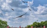 Puy du Fou - Le bal des oiseaux fantomes (110)