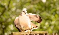 Puy du Fou - Le bal des oiseaux fantomes (055)
