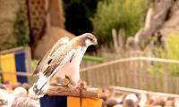 Puy du Fou - Le bal des oiseaux fantomes (056)