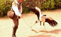 Puy du Fou - Le bal des oiseaux fantomes (059)