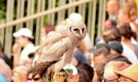 Puy du Fou - Le bal des oiseaux fantomes (060)