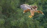 Puy du Fou - Le bal des oiseaux fantomes (066)