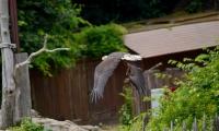 Puy du Fou - Le bal des oiseaux fantomes (069)