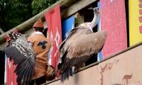 Puy du Fou - Le bal des oiseaux fantomes (076)