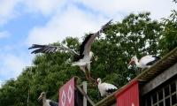 Puy du Fou - Le bal des oiseaux fantomes (080)