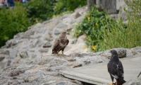 Puy du Fou - Le bal des oiseaux fantomes (082)