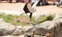 Puy du Fou - Le bal des oiseaux fantomes (083)
