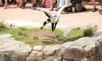 Puy du Fou - Le bal des oiseaux fantomes (084)