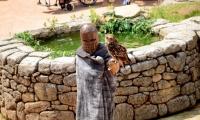 Puy du Fou - Le bal des oiseaux fantomes (085)