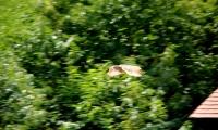 Puy du Fou - Le bal des oiseaux fantomes (087)