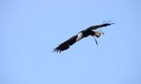 Puy du Fou - Le bal des oiseaux fantomes (090)