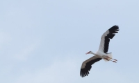 Puy du Fou - Le bal des oiseaux fantomes (096)