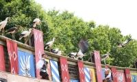 Puy du Fou - Le bal des oiseaux fantomes (099)