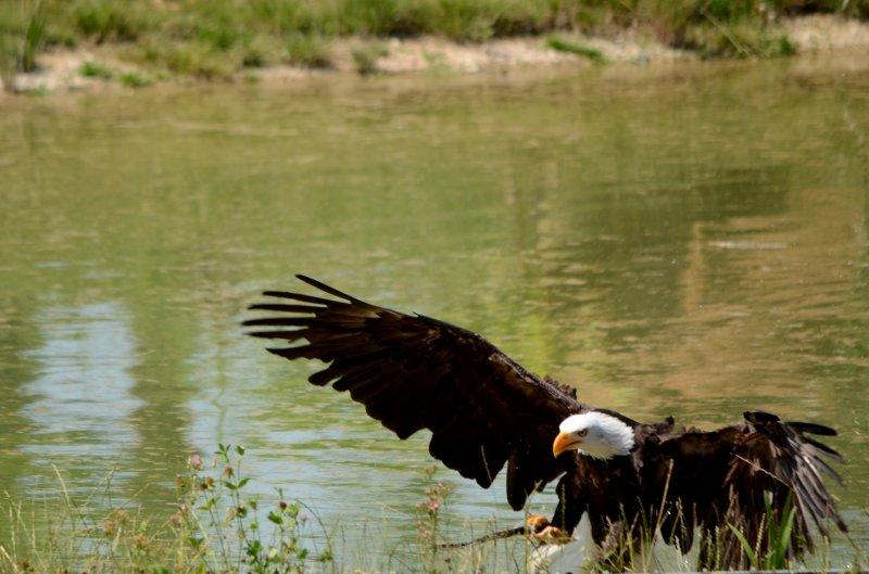 ZooParc de Beauval - Oiseaux